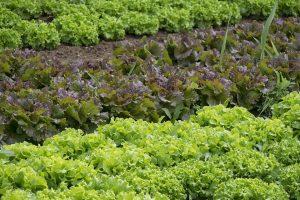 vegetables-861363_960_720